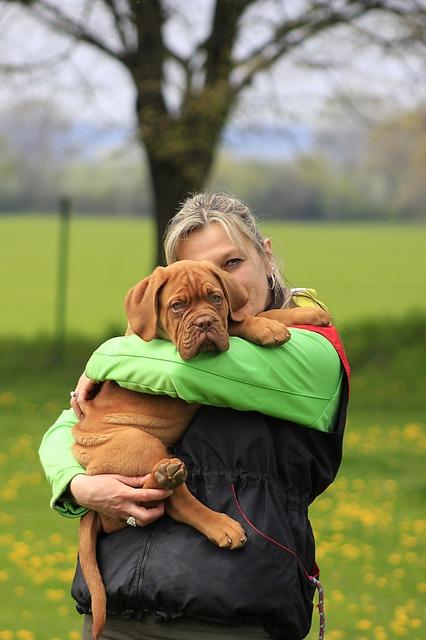 מנוי חיסונים לכלבים
